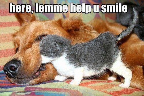 cat-meme-kitten-tries-to-get-big-dog-to-smile